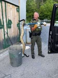 ECO LaPoint with a timber rattlesnake in Warren County