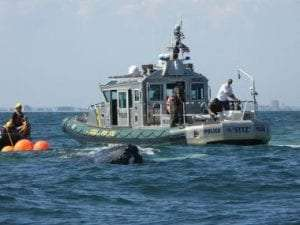 ECOs assist in the rescue of a humpback whale