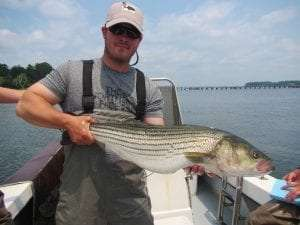 Striped Bass courtesy DEC