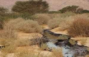 2014 oil spill in Israels Evrona Nature Reserve provided by Society for the Protection of Nature in Israel