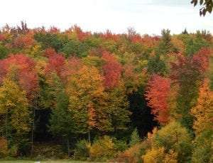 Fall foliage in the Adirondacks courtesy Wikimedia user DigbyDalton