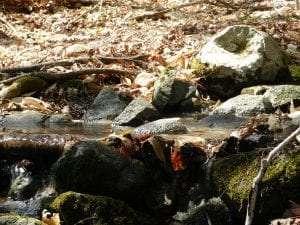 Leaves In Stream by John Warren