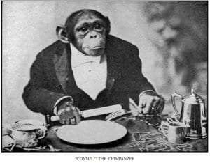Consul, the chimpanzee, from Bostock's book, The Training of Wild Animals