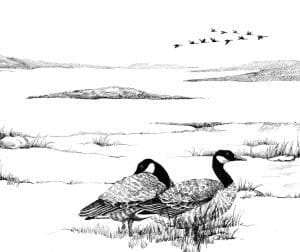 geese by adelaide tyrol