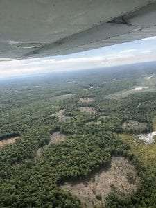 Arial photo of patch cuts at Tug Hill WMA by Tim Pyszczynski
