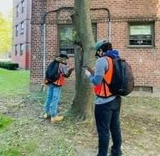 New York City Housing Authority tree survey