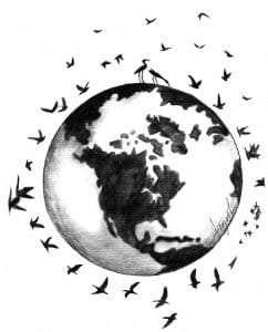 TOS_Bird Migration
