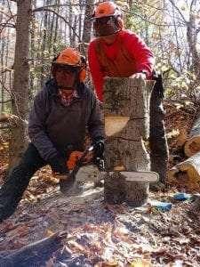 cornell logging courses
