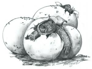 wood turtle by adelaide tyrol