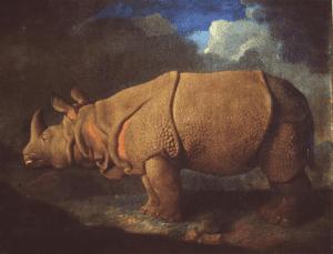 Portrait of Gilbert Pidcocks Indian Rhinoceros
