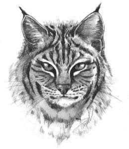 TOS_Bobcat