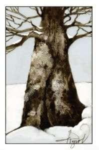 TOS_Lichen-on-tree
