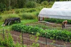 Wild Work Farm in Keene provided by Adirondack Council