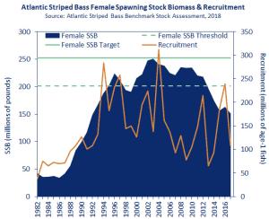 striped bass spawning stock data