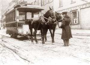 Roosevelt Island Horses