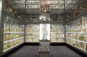Exhibits at the Hunterian Museum