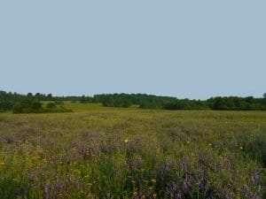 Grassland in Three Mile Bay WMA courtesy DEC