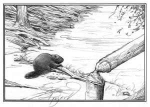 TOS_Beaver