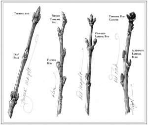 TOS_Winter Twigs