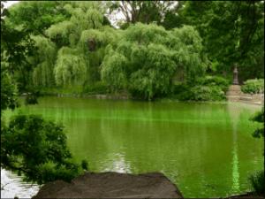 Harmful algal blooms provided by DEC