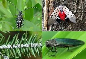 Imported Forest Pests provided by Cary Institute of Ecosystem Studies