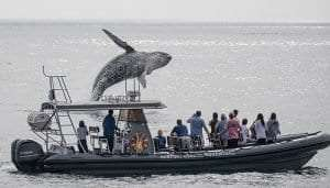 whale watching courtesy Newport Coastal Adventure