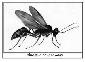 Digger Wasps