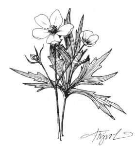 TOS_FlowerColor_Buttercup