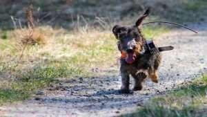 dog with gps tracker photo by Katerina Benediktova and Hynek Burda