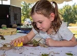 Summer Nature Exploration Activities