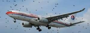 China Eastern Airbus A330 encounters a flock of birds at Londons Heathrow Airport