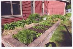 Jean's garden 2017