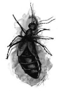 TOS_Blister Beetle