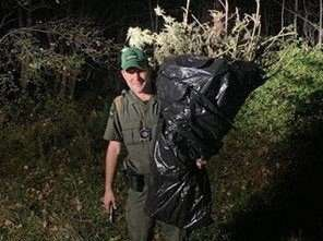 Marijuana plants seized from Gas Springs State Forest