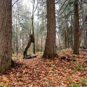 trees in the Doc Kudish grove by Joan Maloof