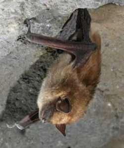 bat by Al Hicks